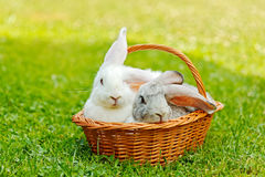 Two rabbits in basket Stock Images
