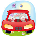 Two Rabbits in a car Royalty Free Stock Images