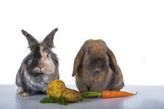 Two rabbits Stock Photography