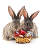 Two rabbits with eggs. Royalty Free Stock Images