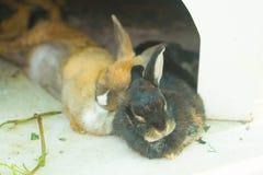 Two rabbits fall asleep stock photos