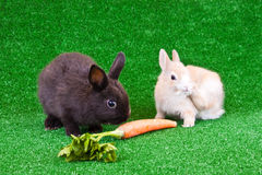 Two rabbits on grass Royalty Free Stock Image