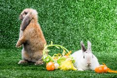 Two rabbits on grass Stock Images