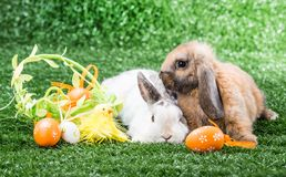 Two rabbits on grass Royalty Free Stock Photography