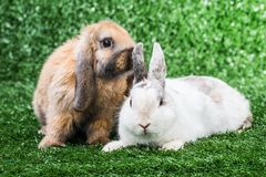 Two rabbits on grass Royalty Free Stock Images