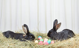 Two rabbits on hay near Easter eggs Stock Photography