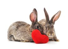 Two rabbits with heart. Two rabbits with heart on a white background Stock Photo