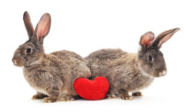 Two rabbits with heart. Stock Photo