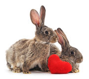 Two rabbits with heart. Stock Image