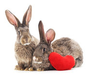 Two rabbits and heart. Royalty Free Stock Photography