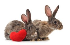 Two rabbits with heart. Two rabbits with heart on a white background Stock Image