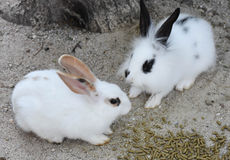 Two Rabbits meeting for lunch Stock Photo