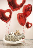 Two rabbits in romantic scene with balloons Stock Photos