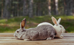Two rabbits sit on a wooden table Stock Photo