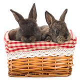 Two rabbits sitting in basket Stock Images
