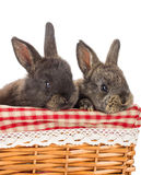 Two rabbits sitting in basket Royalty Free Stock Photos