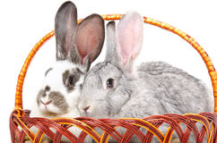 Two rabbits sitting together in a basket Royalty Free Stock Photos