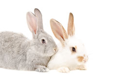 Two rabbits sitting together Royalty Free Stock Photos