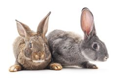 Two rabbits. Two rabbits on a white background Stock Photography
