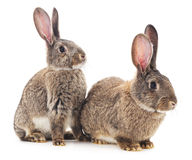 Two rabbits. Stock Photos