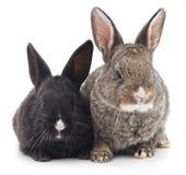 Two rabbits. Royalty Free Stock Photo