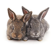 Two rabbits. Stock Image