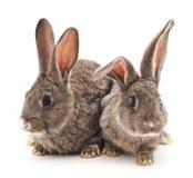Two rabbits. Stock Photo