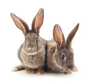 Two rabbits. Two rabbits on a white background Stock Photos