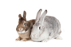 Two rabbits on a white background Royalty Free Stock Photos