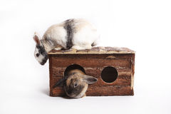 Two rabbits with wooden house Stock Photo