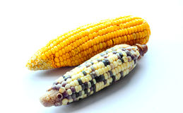 Two race of corn on isolate Stock Photo
