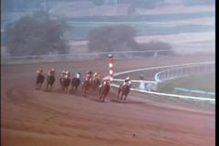 Two race horses breaking away from the pack to take the lead stock video