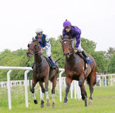 Two race horses close to each other Stock Photography