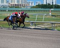 Closing in on the Finish Line. Two racehorses battling it out in the home stretch in a one mile race on dirt at a Southeast florida race track Royalty Free Stock Photo
