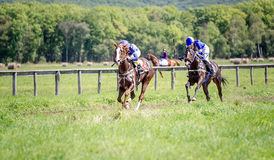 Two racing horse portrait in action Royalty Free Stock Images