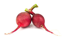 Two radish Royalty Free Stock Images