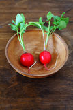 Two radishes in a bowl Royalty Free Stock Photo