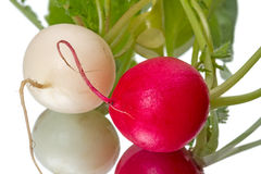 Two radishes  on white Royalty Free Stock Image