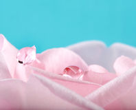 Two rain drops on rose petals Stock Photos