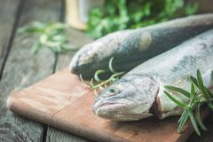 Two rainbow trout on a board. Two rainbow trout on a cutting board with herbs, ready for cooking Stock Images