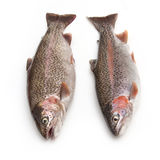 Two rainbow trout Royalty Free Stock Images