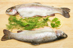 Two rainbow trout with fresh herbs. Two fresh rainbow trout on a board with herbs and lemon Royalty Free Stock Photos