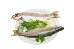 Two rainbow trout with herbs on a plate. Two fresh rainbow trout with herbs and lemon on a plate Royalty Free Stock Photo