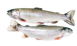 Two rainbow trout isolated Stock Images