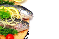Two rainbow trout Stock Photo