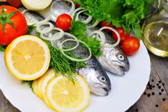 Two rainbow trout Stock Photos