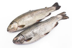 Two rainbow trouts isolated on white Stock Photography