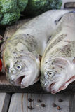 Two rainbow trouts Stock Image