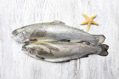 Two rainbow trouts and starfish Stock Photography