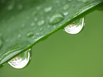 Two raindrops. Two water droplets stock images